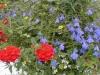 samanplantning1h208w1a6